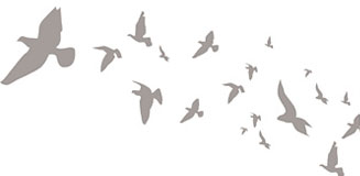 Swallows Wall Sticker Set - flying birds wall decor
