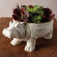 Hanz the Hippo Planter - Red Candy