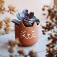 Mini Cat's Whiskers Terracotta Planter - Red Candy