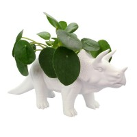 Tricerapot Dinosaur Planter - Red Candy