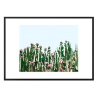 Blush Cactus Framed Print - Red Candy
