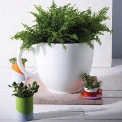 Tea Cup Planter (White) - Red Candy