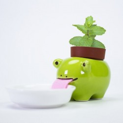 Peropon Drinking Animal Planter - Frog - quirky self-watering pot