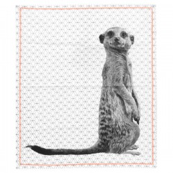 Meerkat Print Tea Towel - animal pattern towel - Present Time