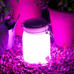Suck UK Sun Jar in Pink - solar powered designer garden light