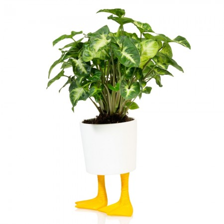 Duck Feet Planter (Large) - Red Candy