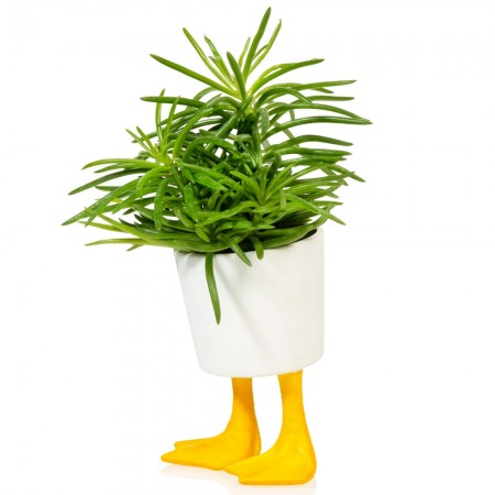 Duck Feet Planter (Small) - Red Candy