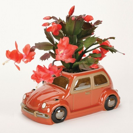Orange Beetle Planter - Red Candy
