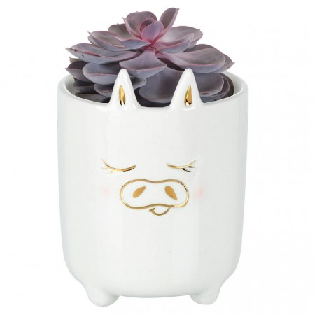 Petra the Pig Planter - Red Candy